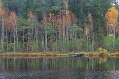 Autumn. At the Lake Paezeris in Lithuania Stock Photography