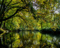 Winkworth Arboretum. The Winkworth Arboretum reflected in a lake royalty free stock photography