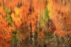 Autumn Lake Reflection Royalty Free Stock Photography