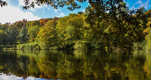 Autumn lake & seasonal trees. This picture was taken at Winkworth Arboretum early Oct Stock Images