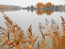 Autumn lake. Shore landscape Stock Images