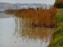 Autumn lake. Shore landscape Stock Image