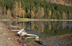 Autumn at the lake shore Royalty Free Stock Image