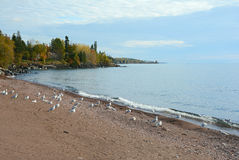Autumn On The Lake Superior-Nordufer Stockbilder