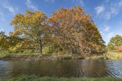 Autumn lake surrounded by autumnal trees royalty free stock photo