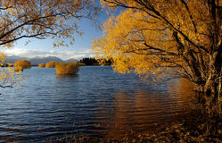 Autumn at Lake Tekapo NZ (16) Stock Image