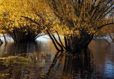 Autumn at Lake Tekapo NZ (25) Stock Photo
