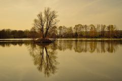 Autumn lake and trees Royalty Free Stock Images