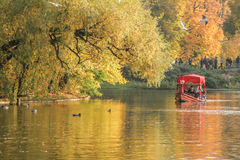 Autumn, lake, trees. Autumn weather in the park Stock Photography