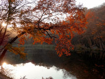 Autumn Lake van het Hout royalty-vrije stock foto