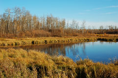 Autumn lake view in elk island Stock Image