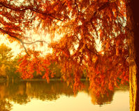 Autumn lake in warm colors. Autumn lake and red fir tree in warm sun colors Stock Photo