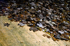Autumn Lake water with leaves Royalty Free Stock Image