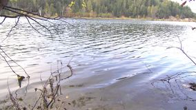 Autumn lake with wind blowing stock video footage