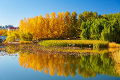 The autumn lakeside landscape Stock Photos