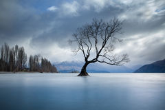 Solitary Tree in Lake Royalty Free Stock Photos