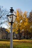 Autumn Lamp Post Royaltyfri Fotografi
