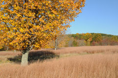 Autumn Landsape. Autumn landscape in New York with tree in the foreground Royalty Free Stock Photo