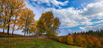 Autumn Landscape Árboles a lo largo del camino y del bosque con el cielo azul Imagenes de archivo