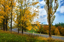 Autumn Landscape Árboles a lo largo del camino y del bosque con el cielo azul Fotografía de archivo libre de regalías