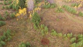 Autumn Landscape Árvores do outono no banco do rio no dia ensolarado filme