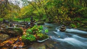 Autumn Landscape video estoque
