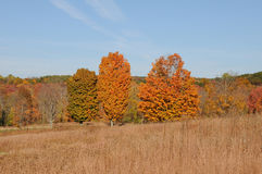Autumn Landscape. In New England with golden field in the foreground Royalty Free Stock Photos