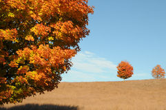 Autumn Landscape. Orange maple tree and golden field in New England landscape Royalty Free Stock Photo