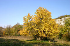 Autumn landscape. In yellow and orange color tones royalty free stock photography
