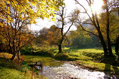 Autumn landscape. In yellow and orange color tones royalty free stock images