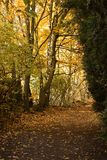 Autumn Landscape. Beautiful autumn landscape. Golden Forest avenue Royalty Free Stock Photos