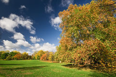 Autumn Landscape. Sunny autumn day in Hyde Park , London stock photo