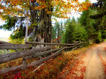 Autumn Landscape. Dirt road in mountain Golija Royalty Free Stock Photography