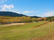 Autumn landscape. Autumn  landscape in the forest Stock Images