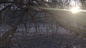 Autumn Landscape stock videobeelden