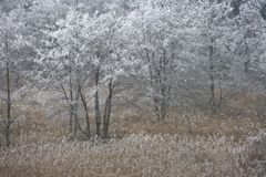 Free Autumn Landscape Stock Photo - 13388630