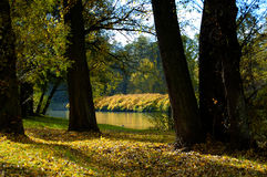 Autumn landscape. River and yellow trees Royalty Free Stock Photos