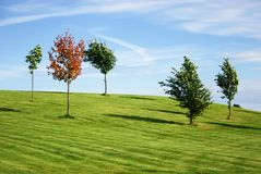 Autumn landscape. Small trees bending in windy autumn weather Royalty Free Stock Photos