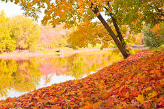 Autumn landscape. With maples and water surface Stock Photos