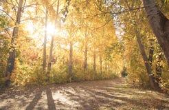 Autumn landscape Royalty Free Stock Photography
