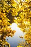 Autumn landscape Stock Photos