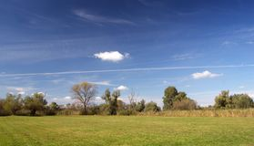 Autumn landscape. (green, grass, trees, blue cloudy sky, cane Royalty Free Stock Photo