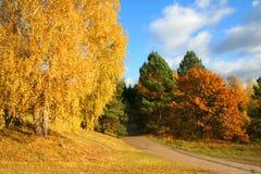 Autumn Landscape. Beautiful vivid nature Stock Images