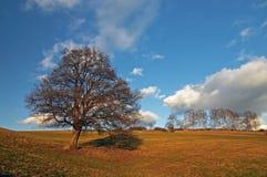 Autumn landscape. Field, the blue sky stock photography
