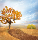 Autumn landscape royalty free stock photo