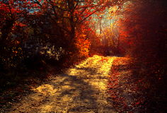 Autumn landscape. Forest at sunset Royalty Free Stock Images