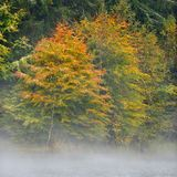 Autumn landscape Stock Images