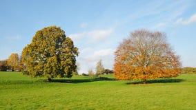 Autumn Landscape Royalty Free Stock Image