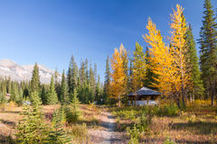 Autumn landscape. Sunny day of autumn in Kootenay National Park, British Columbia, Canada. Beautiful landscape with yellow trees and mountains Stock Photo