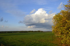 Autumn Landscape. With yellow leaves, green grass and blue sky Stock Photography